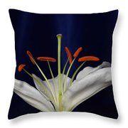 Casablanca White 9966 Throw Pillow