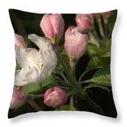 Cascade Of Apple Blossoms Throw Pillow