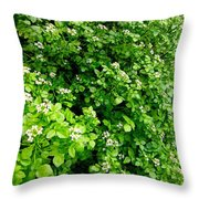 Cascading Fleabane Throw Pillow