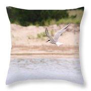 Caspian Tern Throw Pillow