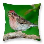 Cassins Finch Carpodacus Cassinii Throw Pillow