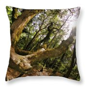 Castle Rock State Park Branch To The Sun Throw Pillow