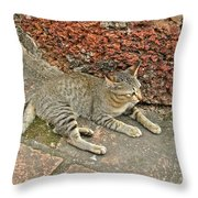 Cat At Wat Mahathat In 13th Century Sukhothai Historical Park-th Throw Pillow
