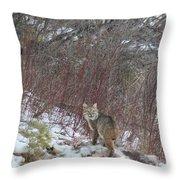 Cat Beauty Throw Pillow