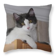 Cat Boy Throw Pillow