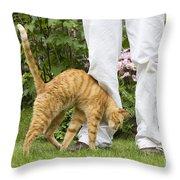Cat Brushing Against Legs Throw Pillow