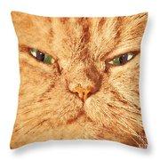 Cat Face Close Up Portrait. Painted Effect Throw Pillow