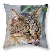 Cat In Athens Throw Pillow