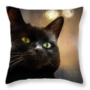 Cat In The Window Throw Pillow
