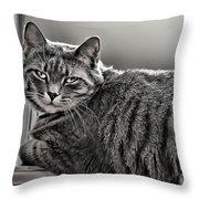 Cat In Window Throw Pillow