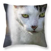 Cat Looking Throw Pillow