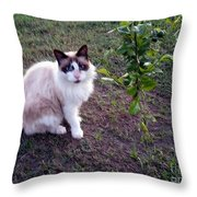 Cat 'n Orange Tree Throw Pillow