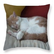 Barn Cat Nap Time Throw Pillow