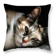 Cat Napping In The Sun By David Perry Throw Pillow
