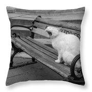 Cat On A Bench Throw Pillow