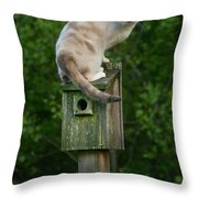 Cat Perched On A Bird House Throw Pillow
