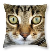 Cat Portrait Macro Shot Throw Pillow
