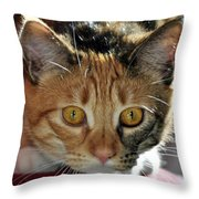 Cat Stare Down Throw Pillow