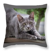 Cat Stretch Throw Pillow