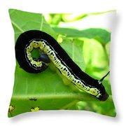 Catalapa Sphinx Caterpillar Throw Pillow