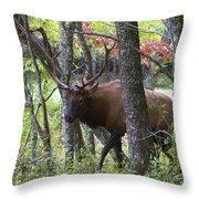Cataloochee Bull Elk Throw Pillow