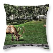 Cataloochee Bull Session Throw Pillow