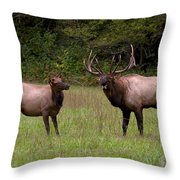 Cataloochee Elk Bull And Cow Throw Pillow