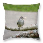 Catbird And Nest Material Throw Pillow