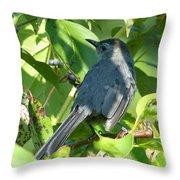Catbird Throw Pillow