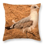 Catching A Tail Wind Throw Pillow