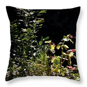 Catching The Last Rays Throw Pillow