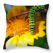 Caterpillar On The Prowl Throw Pillow