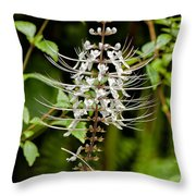 Cat's Whiiskers Throw Pillow