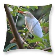 Cattle Egret 1 Throw Pillow