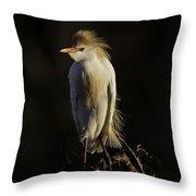 Cattle Egret On Limb Throw Pillow
