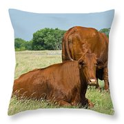 Cattle Grazing In Field Throw Pillow