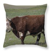 Cattle With Horns Full Body Portrait Throw Pillow