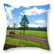 Cattles Roaming Through Hawley Lake Arizona Throw Pillow