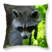 Cautious Coon Throw Pillow