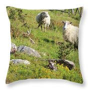 Cautious Sheep In The Pasture Throw Pillow
