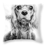 Cavalier King Charles Spaniel Puppy Dog Portrait Throw Pillow