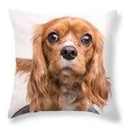 Cavalier King Charles Spaniel Puppy Throw Pillow by Edward Fielding