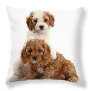 Cavapoo Puppies Throw Pillow