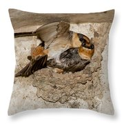 Cave Swallows Throw Pillow