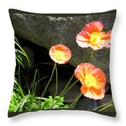 Cavy Poppies Throw Pillow