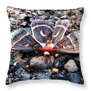 Cecropia Moth Blending In Throw Pillow