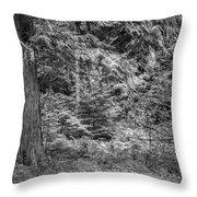 Cedar Along The Trail Of Cedars Glacier National Park Bw Throw Pillow
