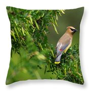 Cedar Waxwing 3 Throw Pillow