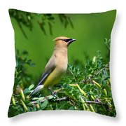 Cedar Waxwing 4 Throw Pillow