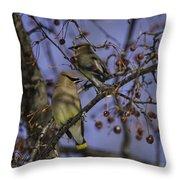 Cedar Waxwing Eating Berries 9 Throw Pillow